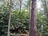 10年の歳月を経て針広混交林として蘇る森