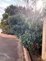 校門近くの樹木群